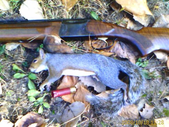 Gray squirrel from French Creek